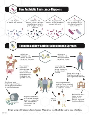 CDC infographic how antibiotic resistance spreads small
