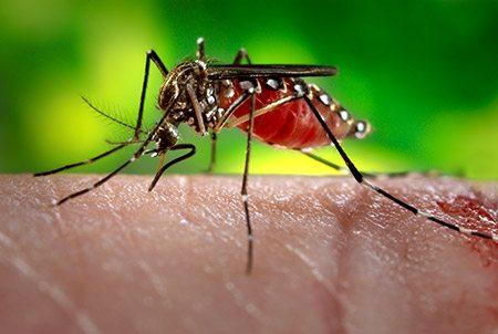zika-virus-mosquito